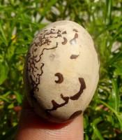 Batu Mustika Khodam Macan