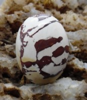 Batu Mustika Loreng Macan