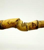 Bambu Rotan Ketemu Ruas Benda Pusaka Banyak Dicari