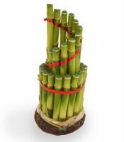 Kegunaan Tanaman Bambu Pembawa Hoki Rejeki