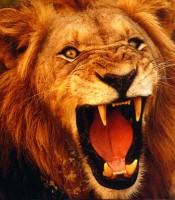 Manfaat Pengisian Khodam Singo Emas