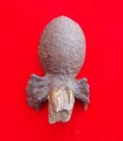 Kegunaan Khasiat Batu Laba-laba