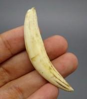 Kegunaan Pusaka Taring Macan Keramat Yang Banyak Diburu Kolektor