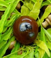 Khasiat Mustika Ratu Kumbang