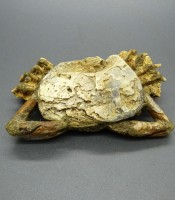 Khasiat Pusaka Fosil Kepiting Kuno