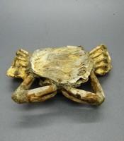 Kegunaan Pusaka Fosil Kepiting Usia Ribuan Tahun Silam