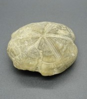 Kegunaan Pusaka Fosil Putih Khodam Pantai Selatan