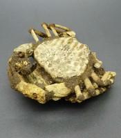 Manfaat Fosil Kepiting Pusaka Keramat
