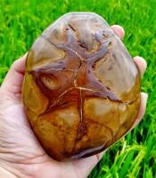 Manfaat Mustika Jantung Raja Khodam Keramat Koleksi Sesepuh