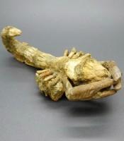 Manfaat Fosil Scorpion Langka