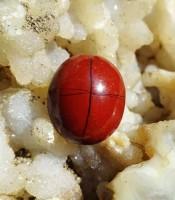 Khasiat Batu Mustika Tapak Jalak Merah