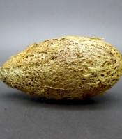 Jual Jimat Wesi Kuning Kepompong Ukuran Besar
