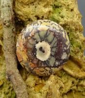 Batu Mustika Mata Khodam Sesepuh