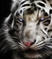 Khasiat Pengaktifan Ajian Macan Putih