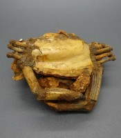 Kegunaan Pusaka Fosil Kepiting Keramat Sucses Usaha