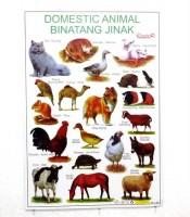 Grosir Poster Binatang Jinak