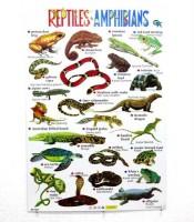 Grosir Poster Dinding Hewan Reptil Ampibi