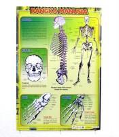 Grosir Poster Dinding Rangka Manusia