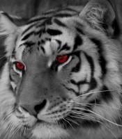 Kegunaan Aktivasi Khodam Macan Putih