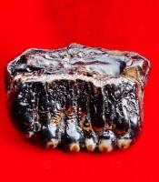 Khasiat Fosil Hitam Keramat Berkhodam Ganas